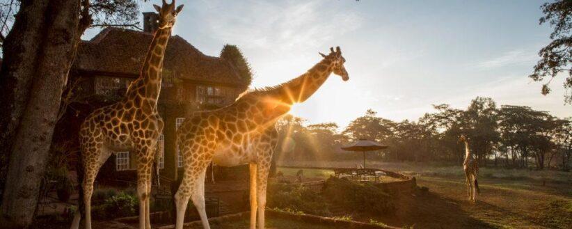 Adventurer Mt Kenya Samburu Mara