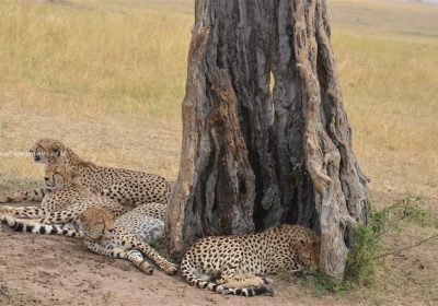 Africa Outdoors Safari 111