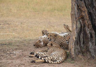 Africa Outdoors Safari 112