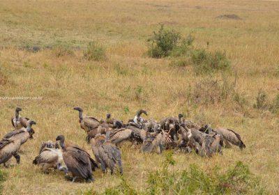 Africa Outdoors Safari 113