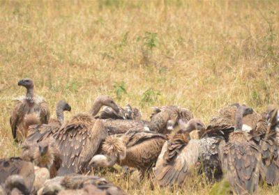 Africa Outdoors Safari 114