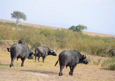 Africa Outdoors Safari 121