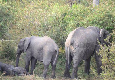 Africa Outdoors Safari 125