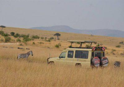 Africa Outdoors Safari 129