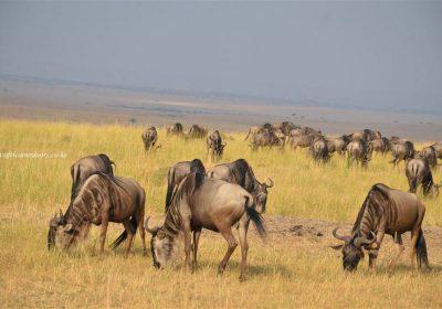 Africa Outdoors Safari 130