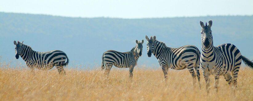 Kenyas Amboseli Mara 1
